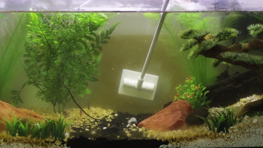 dirty fish tank will cause fish ill