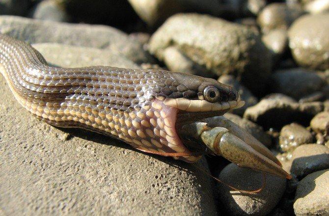 snake is eating