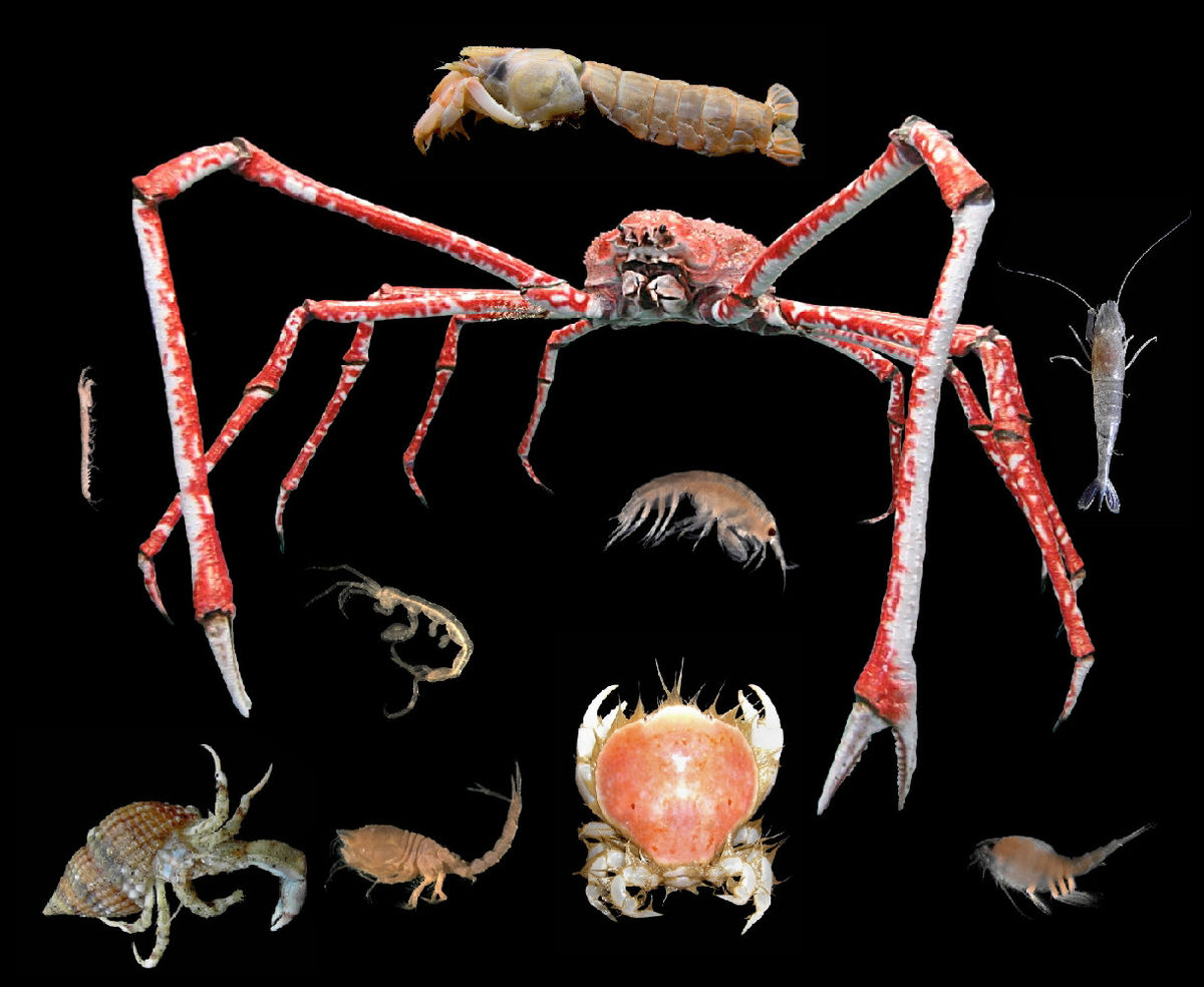 Image result for Crustaceans