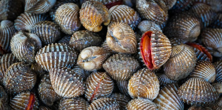 Image result for Cockles