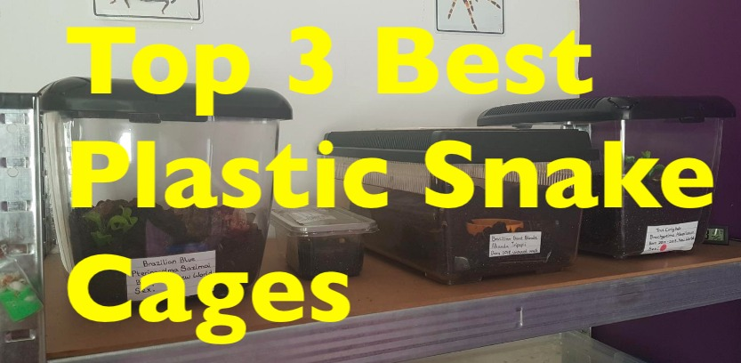 Photo of Top 3 Best Plastic Snake Cages with reviews and comparison