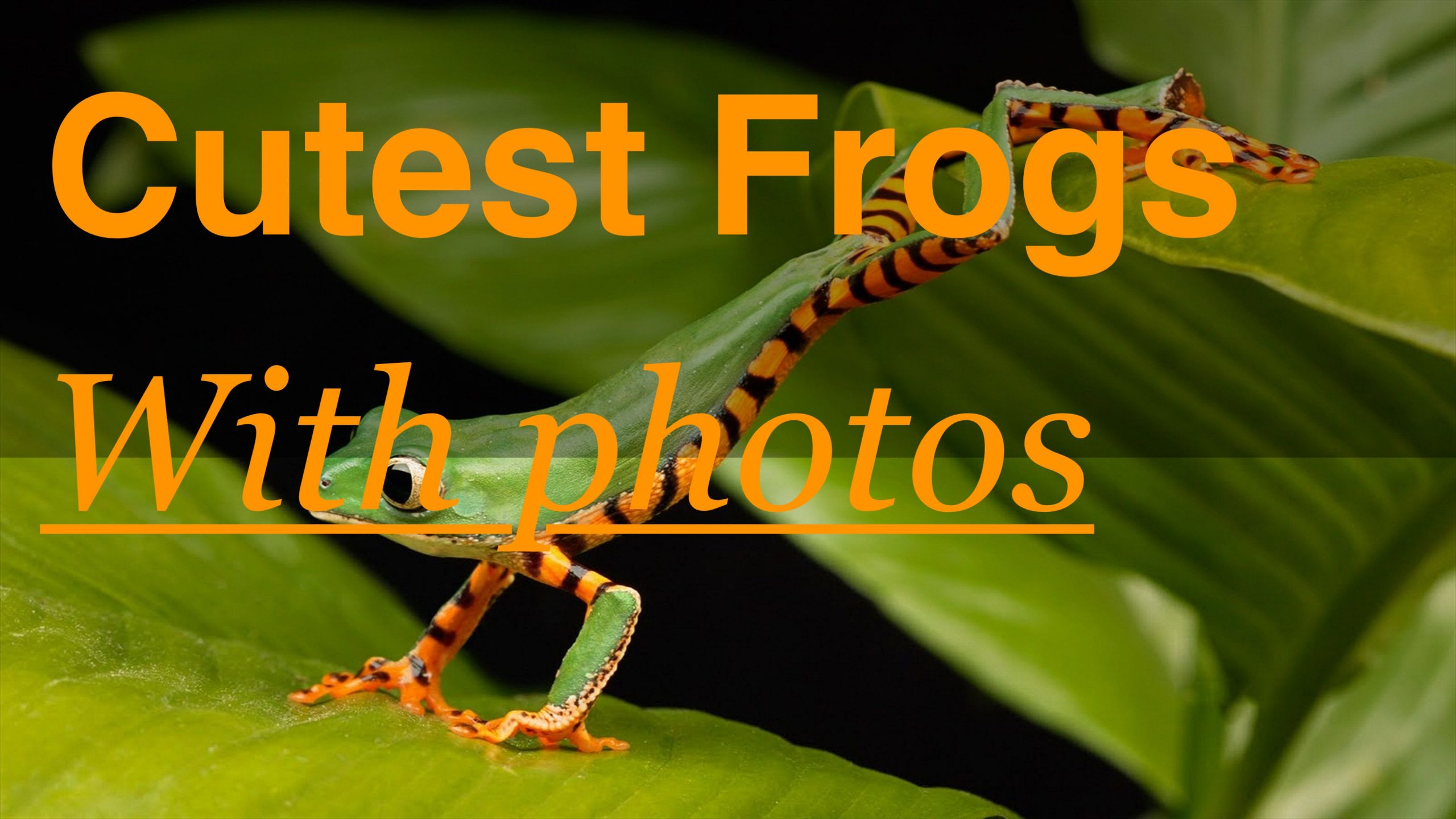 Photo of Cutest Pet Frog Breeds (with Pictures)