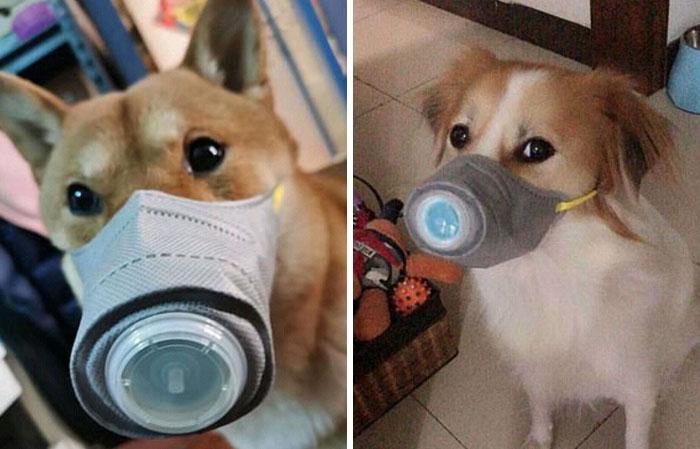 Photo of Best dog masks to prevent coronavirus
