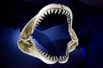 Image result for ball python teeth