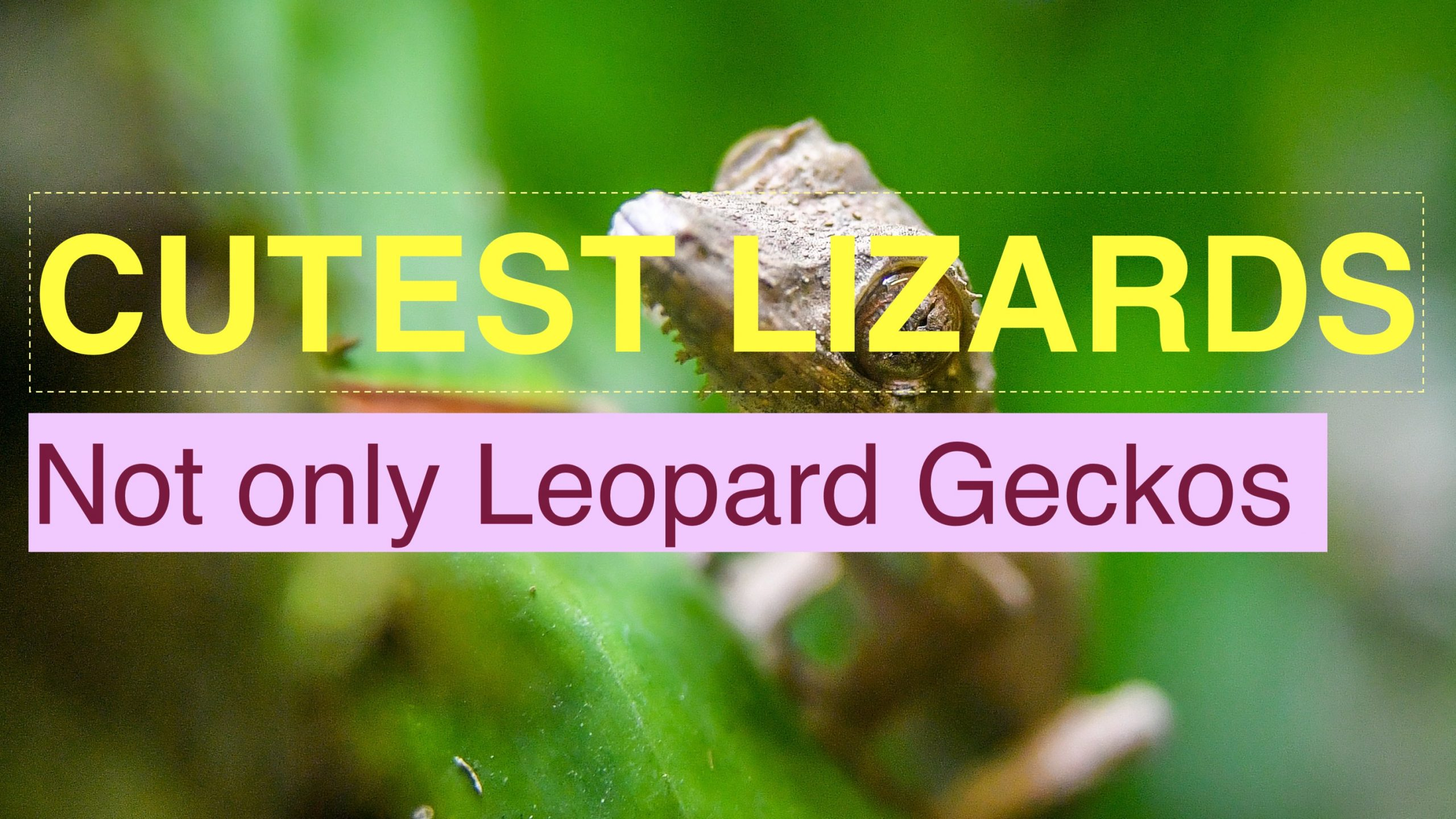 Photo of Cute pet lizards(Top 7 cutest lizard species)
