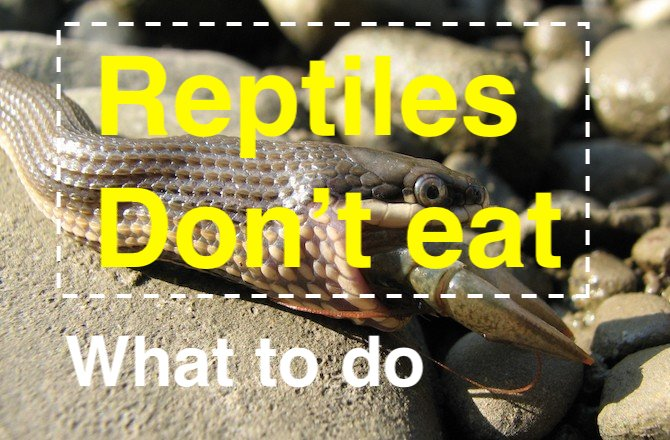 Photo of What to do if my reptiles won't eat