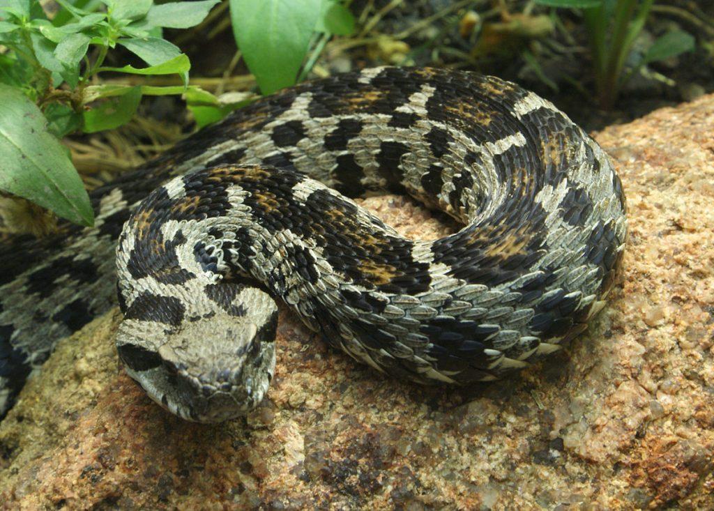 Should I get a pet snake?