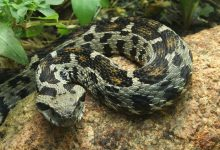 Photo of Looking for rarest snakes? Top 15 rare snakes on the plant
