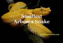 Photo of Beginner's guide for smallest arboreal snake