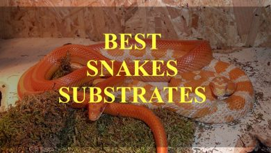 Photo of Best 10 substrates for snakes – And cheap