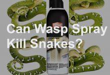 Photo of Will Wasp Spray Kill Or Hurt A Snake?