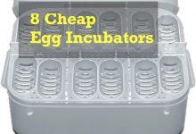 Photo of Cheap egg incubators [Under $50]
