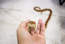 Photo of Best Bedding for Corn Snakes