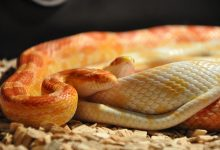 Photo of Free snake photos download – Folder included
