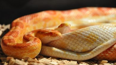 Photo of What reptile should you get?