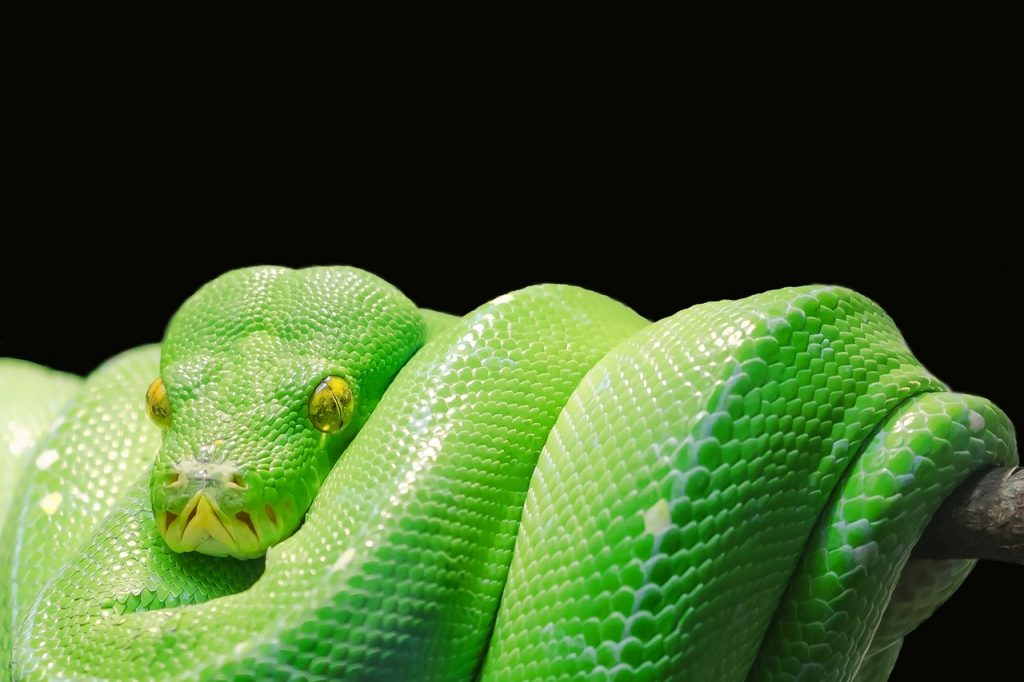 python in general is harmless snake