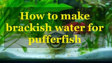 Photo of How to make brackish water for pufferfish