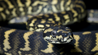 Photo of Beginner's guide to semi-arboreal snakes