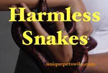 Photo of List of 10 harmless snakes