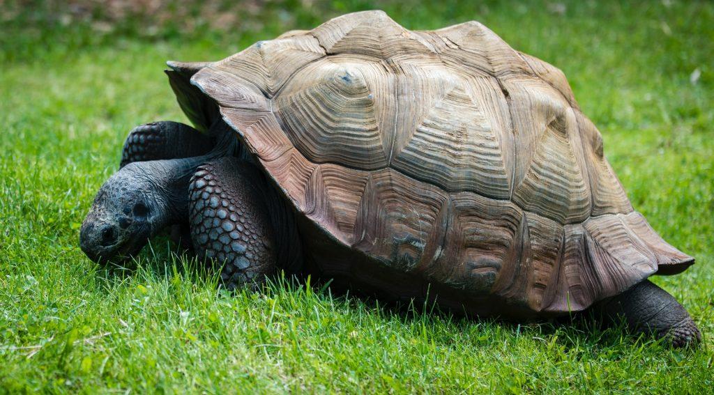 All Tortoises Are Turtles?