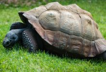 Photo of What are the differences between tortoise and turtle?