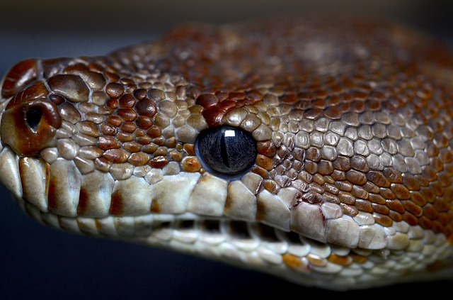 Snake's eyes can only notice the shape of an object