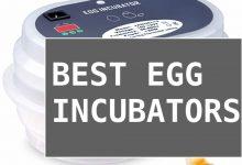 Photo of [Ultimate Guide] Best Egg Incubators