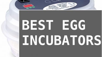 Photo of [Ultimate Guide] Best Egg Incubators