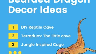 Photo of 11 Different Ideas how to décor your Bearded Dragon Cage