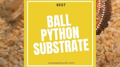 Photo of Ball Python Substrate: How To Choose The Best? (Buyers Guide)