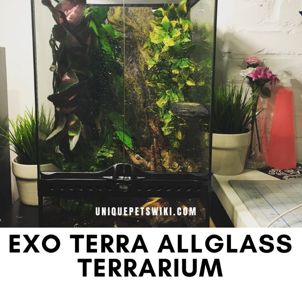 Exo Terra Allglass Terrarium Reviews