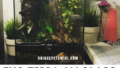 Photo of Exo Terra Allglass Terrarium Reviews + Buying Guide