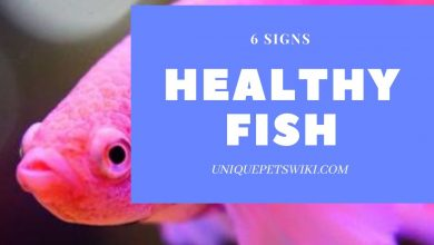 Photo of Signs of A Happy and A Healthy Fish