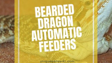 Photo of Best Bearded Dragon Automatic Feeders (Can Use For Dried Worm)