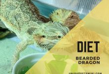 Photo of Bearded Dragon Diet: What To Feed Your Beardies? How Often They Eat By Ages?