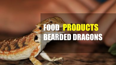 Photo of Best Food for Bearded Dragons (Include Buyers Guide)