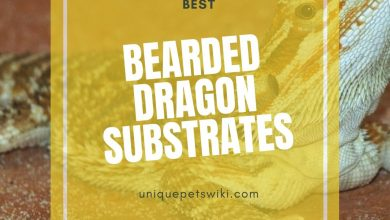 Photo of Best Substrate For Bearded Dragons