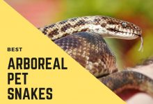 Photo of Best Arboreal Pet Snakes For Beginners