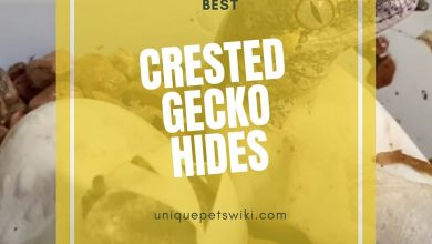 Photo of Best Crested Gecko Hides (Buyers Guide Included)