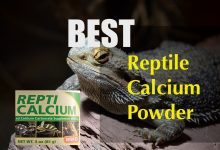 Photo of Best reptile calcium powder | Applicable for bearded dragon