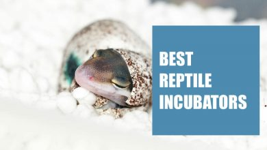 Photo of Best Reptile Incubator (Buyers Guide Included)