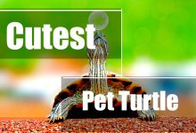 Photo of Cutest Pet Turtles (Photos included)