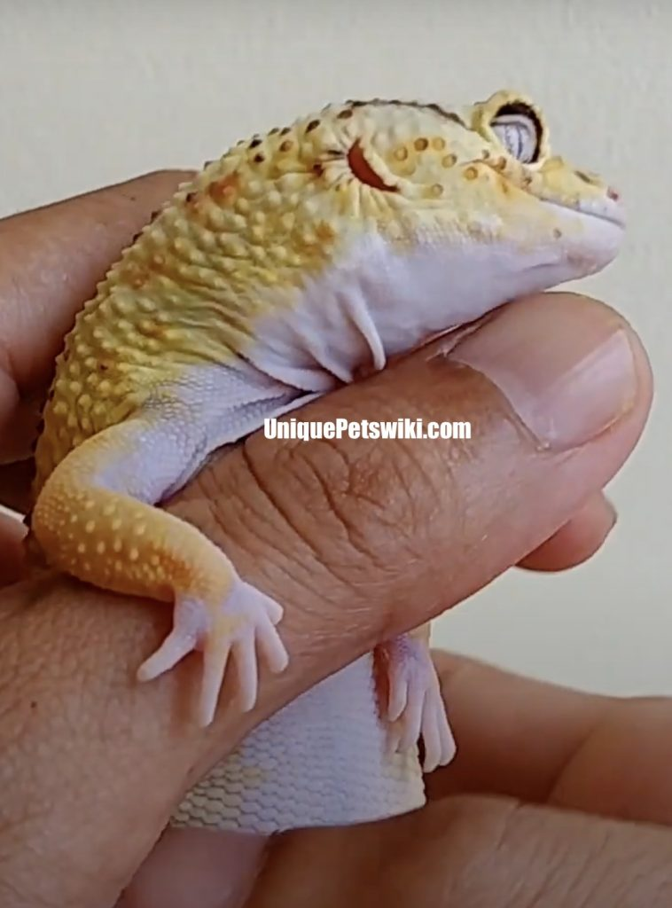 incubation period is 30-90 days depends on the species reptiles