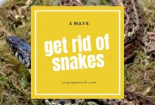 Photo of How to Get Rid of Snakes?