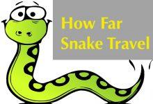 Photo of How Far Do Snakes Travel?
