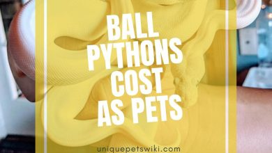 Photo of How Much Does A Ball Python Cost? With 15 examples