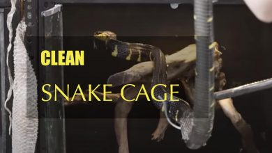Photo of Step By Step to clean a snake cage