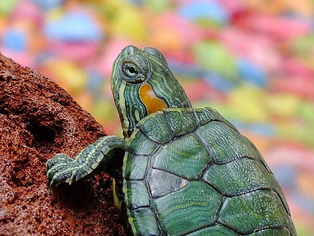 Reptiles Average Life Expectancy