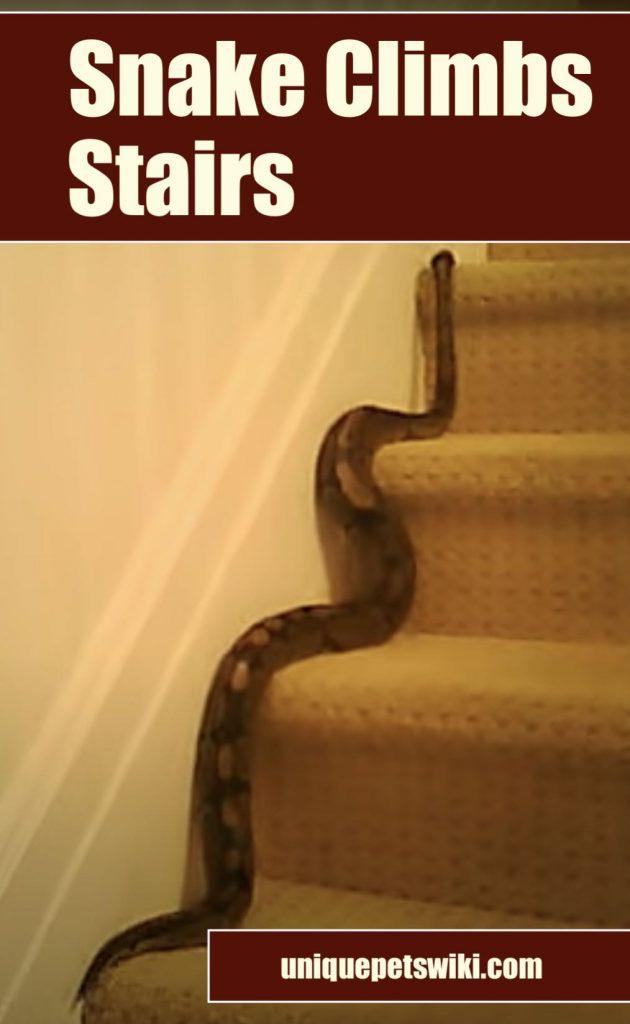 Snake climbs the stair