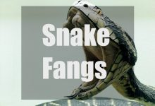 Photo of Snake Fangs – All About Snake Fangs You Need to Know